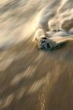 vague déferlante de seashell image stock