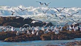 Vague déferlante et mouettes d'océan Photographie stock