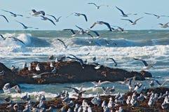 Vague déferlante et mouettes d'océan Image libre de droits