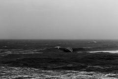Vague massive de baril se cassant sur le récif peu profond pendant la tempête Photos libres de droits