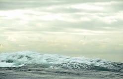 Vague sur la surface de l'océan photos libres de droits
