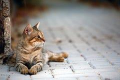 Vaguent le chat Image libre de droits