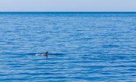 Vagues ci-dessus d'aileron de dauphin, la mer Méditerranée photographie stock libre de droits