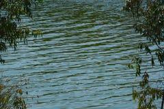 Vagues dans le lac Photos stock