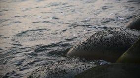Vagues de mer frappant le bord de la mer banque de vidéos