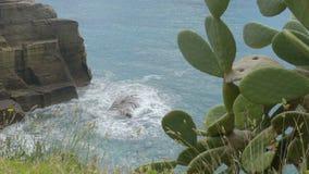 Vagues de roulement de mer variable contre les falaises rocheuses montrées de ci-dessus avec le cactus de côté banque de vidéos