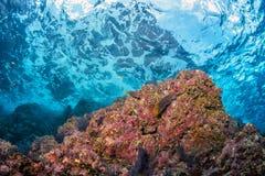 Vagues sous-marines sur le récif Images stock