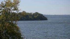 Vagues sur la rivière et bruir les feuilles vertes banque de vidéos