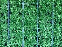 vai o verde Foto de Stock Royalty Free