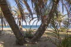 Vai plaża z drzewkami palmowymi Est wybrzeże Crete zdjęcia royalty free