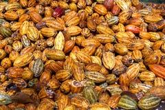 Vaina amarilla del cacao en la plantación del cacao fotos de archivo libres de regalías