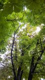 Vaina de guisante verde fresca Fotos de archivo