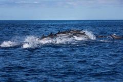 Vaina de los delfínes que viajan en el océano imágenes de archivo libres de regalías