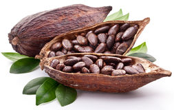 Vaina del cacao foto de archivo