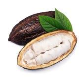 Vaina del cacao con las hojas imagen de archivo