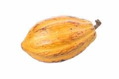 Vaina del cacao en blanco imágenes de archivo libres de regalías