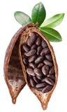Vaina del cacao imagenes de archivo