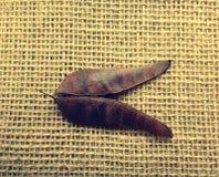 Vaina secada de la cerca de la flor Foto de archivo