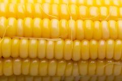 Vainas amarillas del maíz preparadas en un contexto blanco imagen de archivo libre de regalías