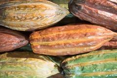 Vainas crudas del cacao Fotos de archivo libres de regalías
