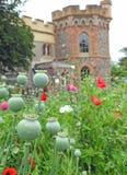 Vainas de la semilla de amapola de las amapolas que crecen en prado de los campos de los parques de los argumentos del jardín del imagenes de archivo