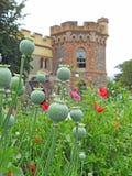Vainas de la semilla de amapola de las amapolas que crecen en prado de los campos de los parques de los argumentos del jardín del imágenes de archivo libres de regalías