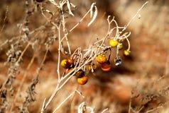 Vainas de la semilla de la temporada de otoño Foto de archivo