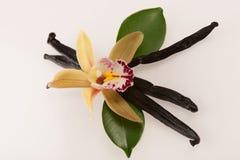 Vainas de la vainilla y flores de la orquídea en el fondo blanco Imagenes de archivo