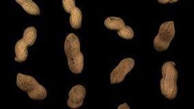 Vainas del cacahuete que caen en la colocación negra del fondo libre illustration