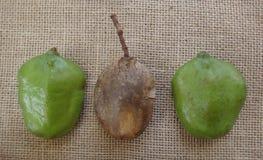 Vainas del Jacaranda inmaduras y secas en fondo del yute Fotografía de archivo