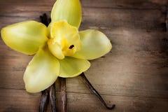 Vainas y flor de la vainilla Imagenes de archivo