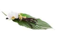 Vainas y flor de la vainilla Foto de archivo libre de regalías
