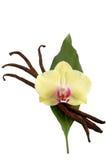 Vainas y flor de la vainilla Fotos de archivo