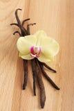 Vainas y flor de la vainilla Fotos de archivo libres de regalías