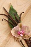 Vainas y flor de la vainilla Imágenes de archivo libres de regalías