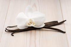 Vainas y flor de la vainilla Foto de archivo