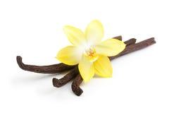 Vainas y flor de la vainilla aisladas Imagenes de archivo