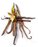Vainas y flor de la vainilla aisladas en blanco Fotografía de archivo libre de regalías
