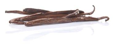 Vainilla Bean Pods I Foto de archivo libre de regalías