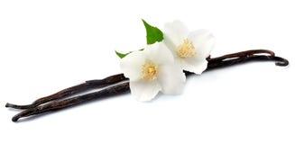 Vainilla con las flores blancas Fotos de archivo libres de regalías