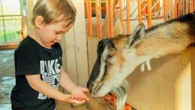 Vakantie in het land - weinig jongen voedt een geit oude baby 2 jaar Stock Fotografie
