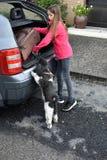 Vakantie met hond royalty-vrije stock foto