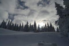 Vakantie op de berg, Jahorina stock foto's