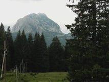 Vakantie op Durmitor-Berg in de zomer royalty-vrije stock afbeelding