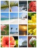 Vakantie in Paradijs stock afbeeldingen