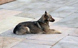 Vaken brun hund som ligger på stentjock skiva Arkivbilder