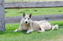 Vaken hund på vakten i lantlig region Arkivfoto