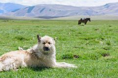 Vaken hund på vakten i lantlig region Royaltyfri Bild