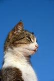 Vaken katt Arkivfoto