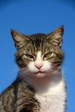 Vaken katt Arkivbilder